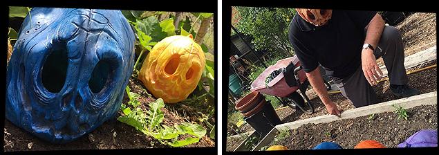 pumpkinray3