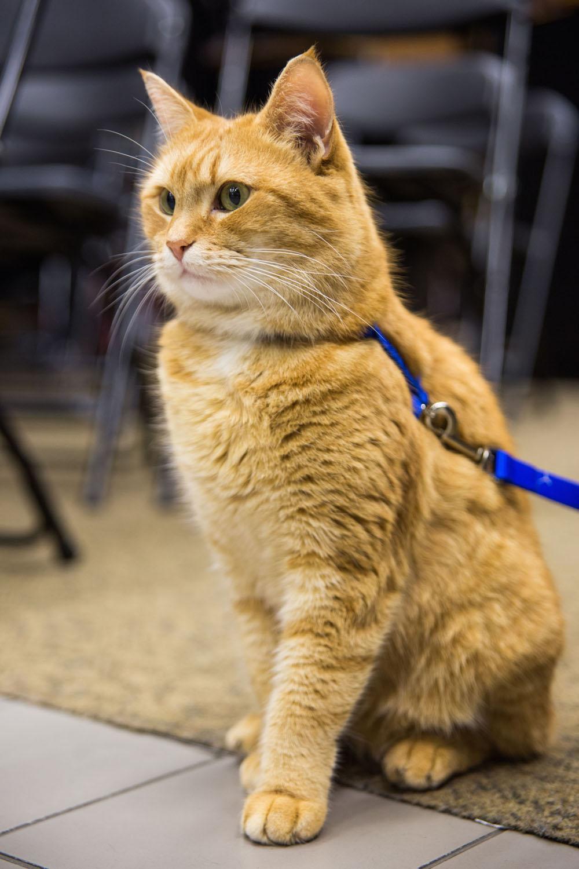 street cat bob questions